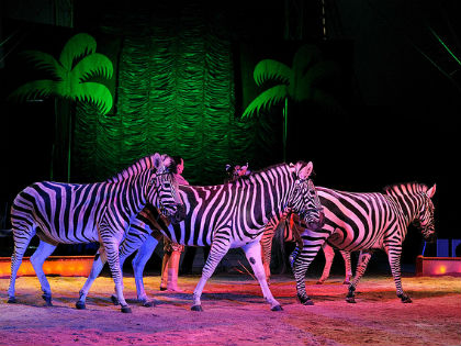 Stop Wales' wild animal circus