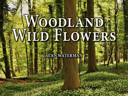 Learn more about Britain's wonderful woodland flowers in a beautifully illustrated new book